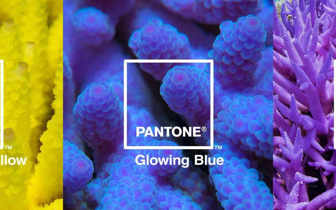 Pantone y Adobe se unen para crear una paleta de colores inspirados en corales en peligro de extinción
