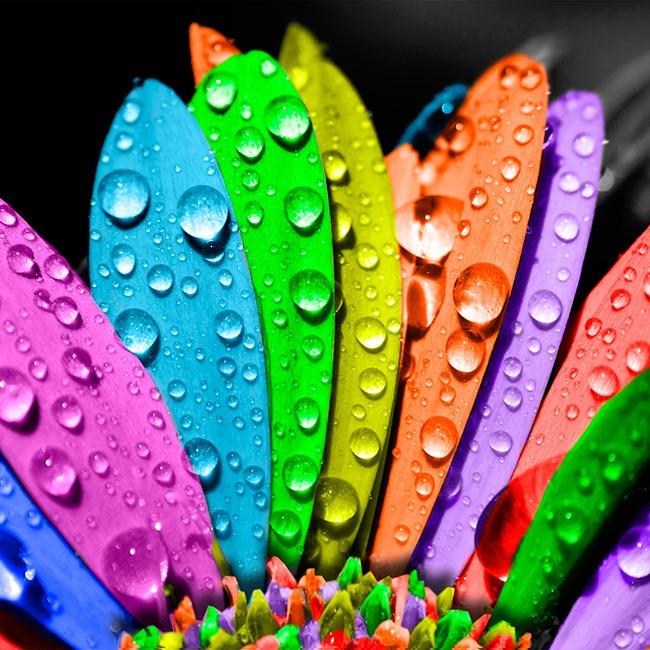 ¿Sabes lo que significan los colores?